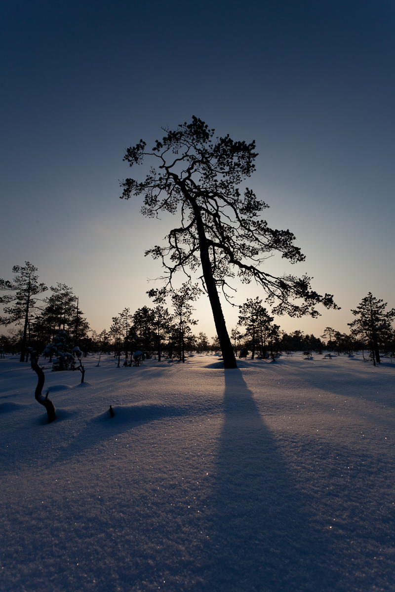 Jaak Sarv bog canon eesti estonia europe landscape loodus lumi maastik nature photography raba snow talv wildlife winter