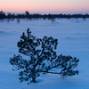 Karge loojang rabas / Cold Sunset in the Bog