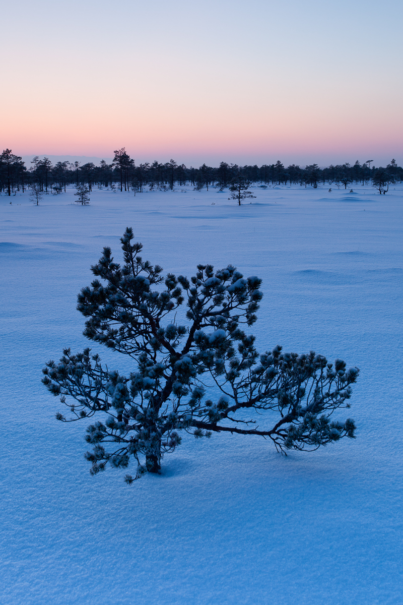Jaak Sarv bog canon eesti estonia europe evening landscape loodus lumi maastik nature photography päikeseloojang snow sunset talv winter õhtu