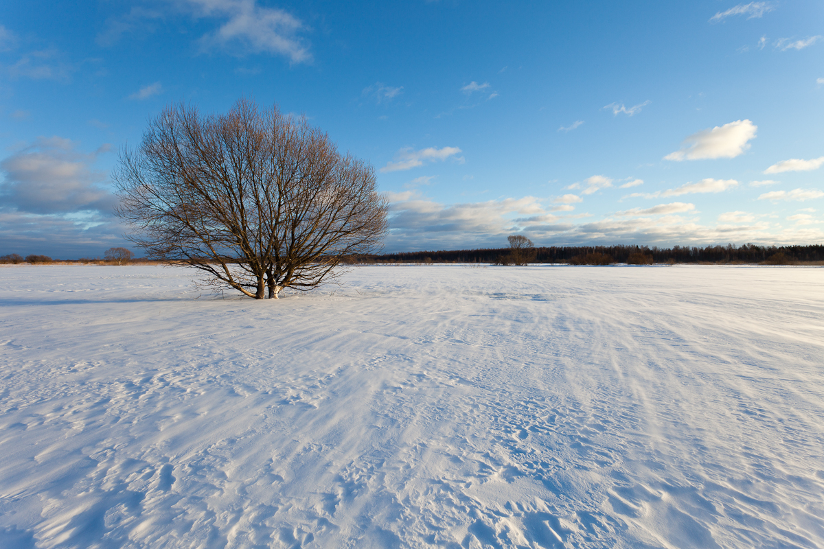 Jaak Sarv canon eesti estonia europe landscape loodus lumi maastik nature photography snow talv wildlife winter