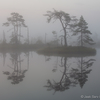 Udune hommik rabas / A Foggy Morning in the Bog