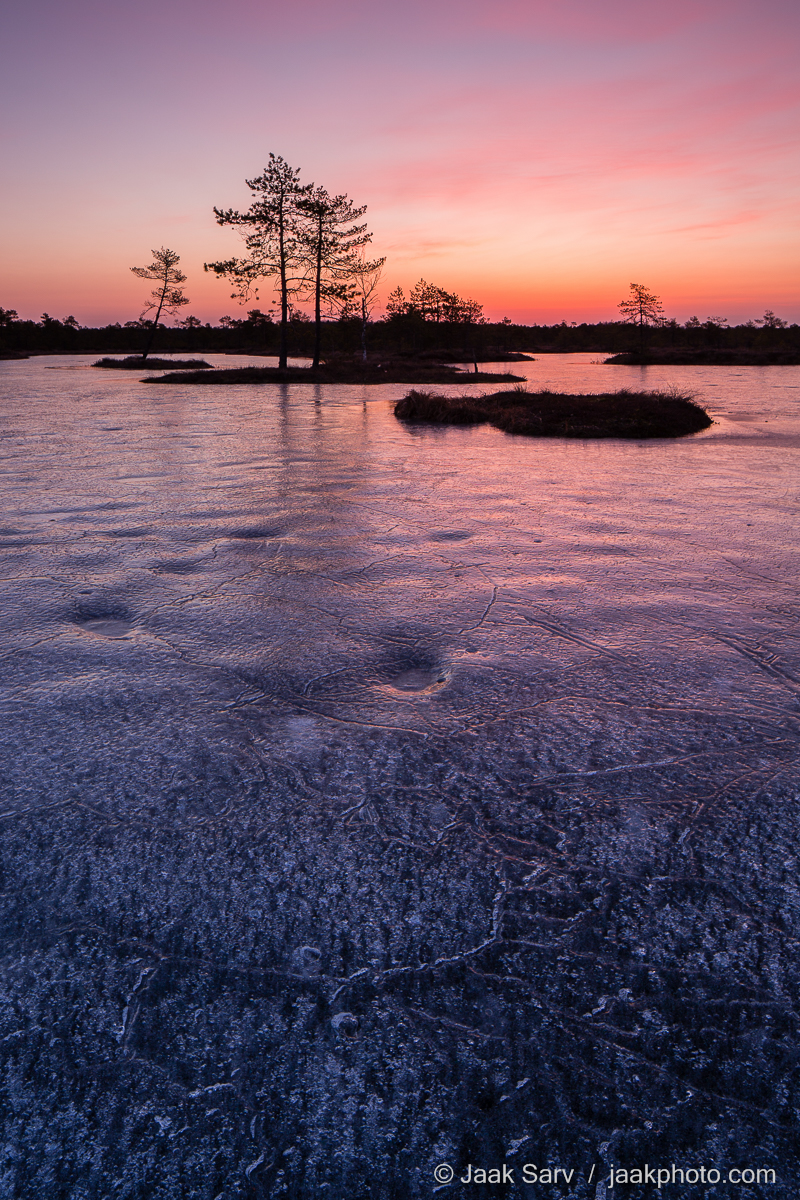 Baltics Canon Eesti Estonia Europe Jaak Sarv blue bog bog pool colorful hommik ice jää landscape laugas lilla loodus loodusfoto looduspilt maastik morning nature nordic northern orange oranž photography pink punane purple puud päikesetõus raba rabalaugas red roosa sinine sky soo sunrise swamp taevas talv trees violet violetne värviline wildlife winter