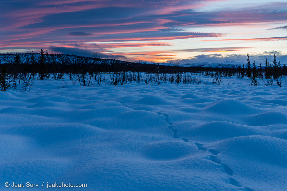 Canon Europe Jaak Sarv Rootsi Sarek Nasjonalpark Sarek National Park Scandinavia Sweden beautiful black blue cold colorful evening forest freezing ilus karge külm landscape lilla loodus loodusfoto looduspilt lumi maastik mets mountains must mäed nature nordic northern orange oranž photography pink purple puud päikeseloojang roosa sinine sky snow sunset taevas talv trees violet violetne värviline wildlife winter õhtu